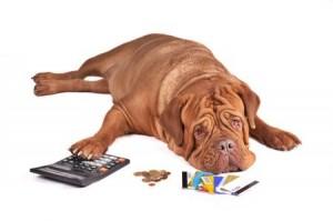 Forlorn dog bemoaning not having enough cash