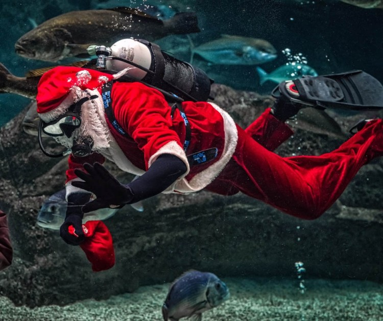 centrelink loans - santa with aqualung gear dep sea diving